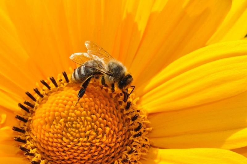 כתבה על היעלמות הדבורים בעולם