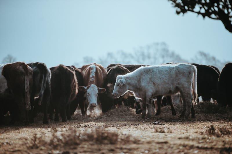 Farm Communities