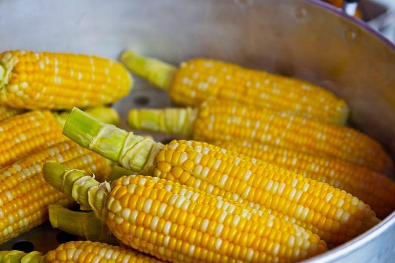 Épluchette de maïs