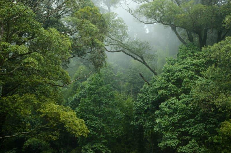 Den utrolige regnskogen
