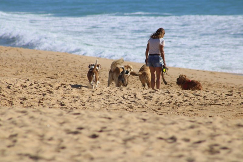 Book a walk for your dog