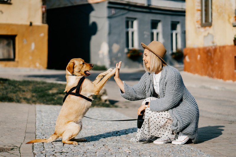 Dog Behaviour Consults