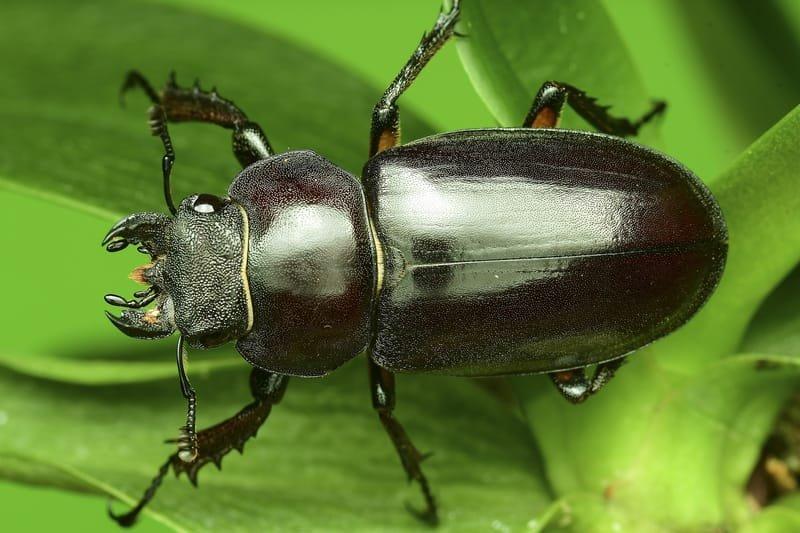 شركات مكافحة حشرات  في الكويت / 92220640 / مكافحة حشرات