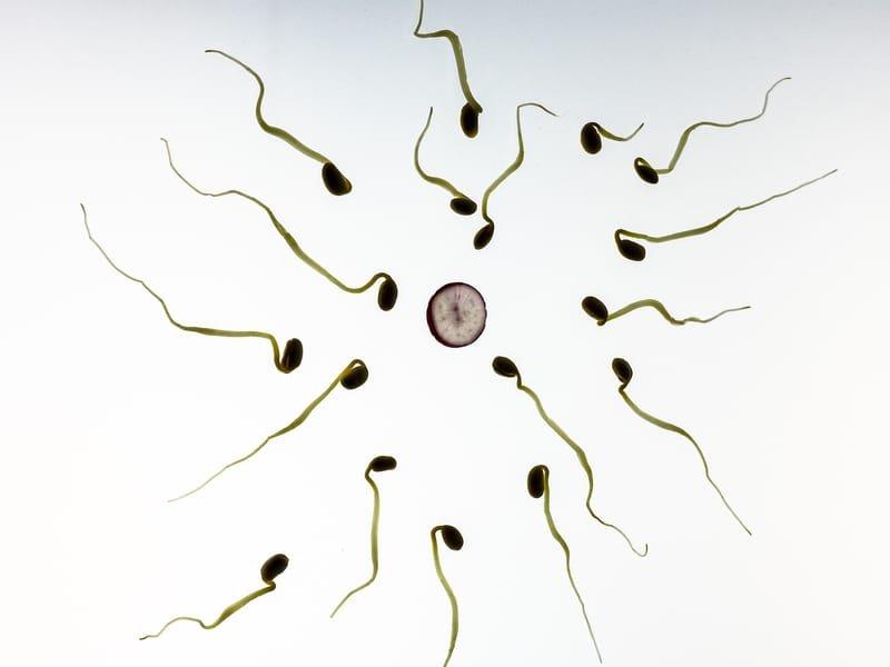 Spermogramme