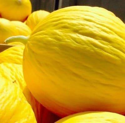 Il Melone Giallo. Fresco, selezionato e garantito.