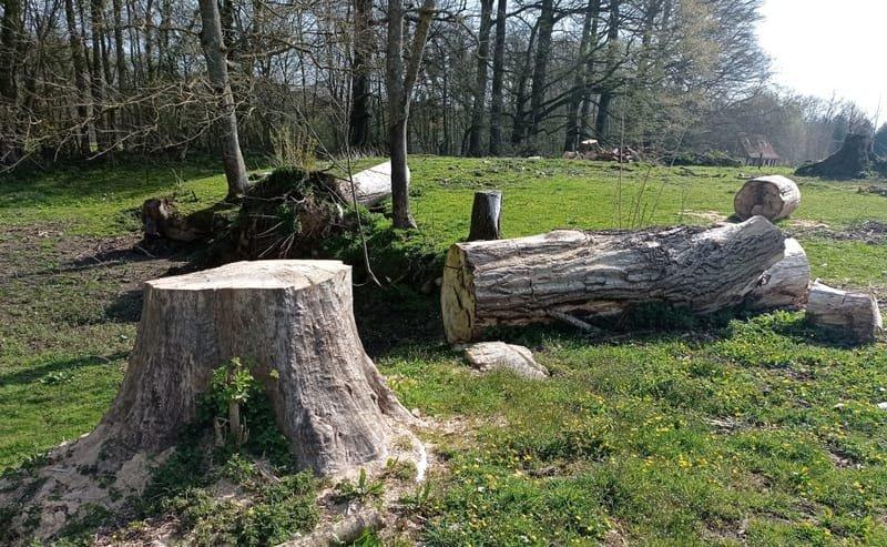 Espaces verts et bois