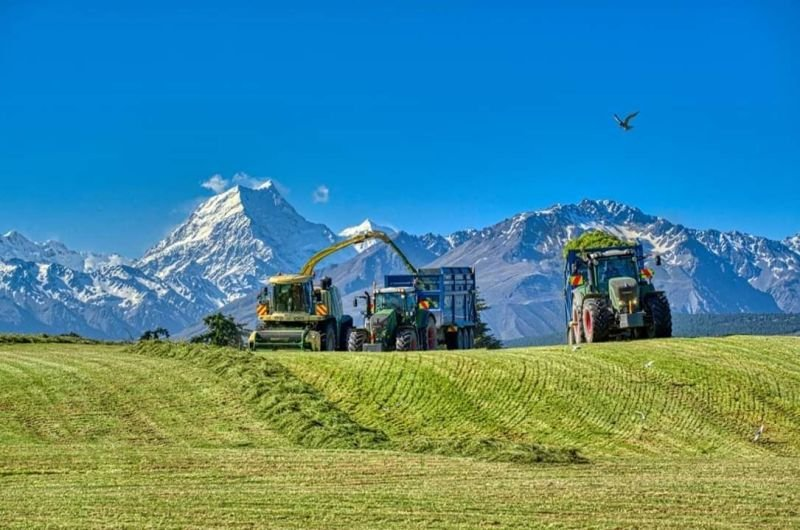 Fine Chop and long Chop Silage.