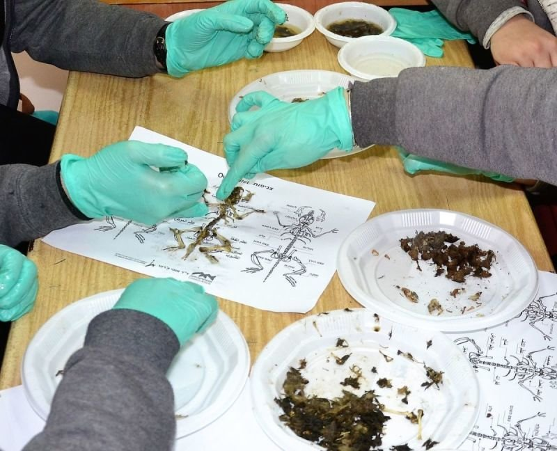 Using owl pellets in a citizen science educational research project in Israel