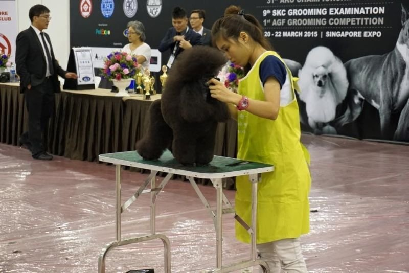 SKC GROOMING COMPETITION 2015