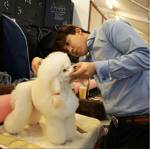 CANINE GROOMING SERVICES