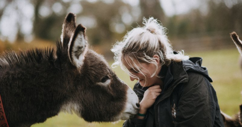 Donkey Experience Days. Hourly Or Own A  Donkey For Your Entire Stay