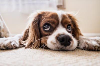 שפת הגוף של הכלב