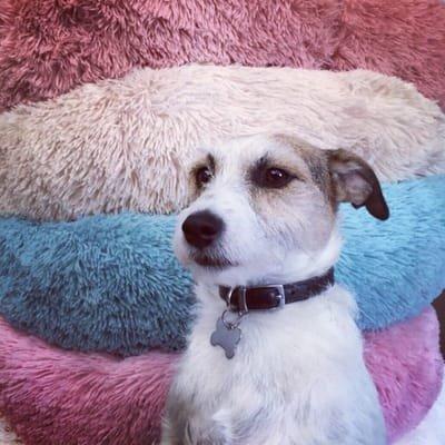 Dog doughnut calming beds