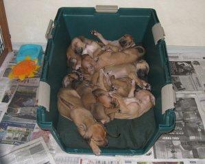 Puppies 2011