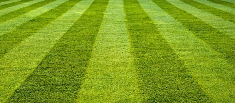 Grounds and sports Turf Maintenance