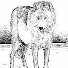 Whitewolf construction and woodworking