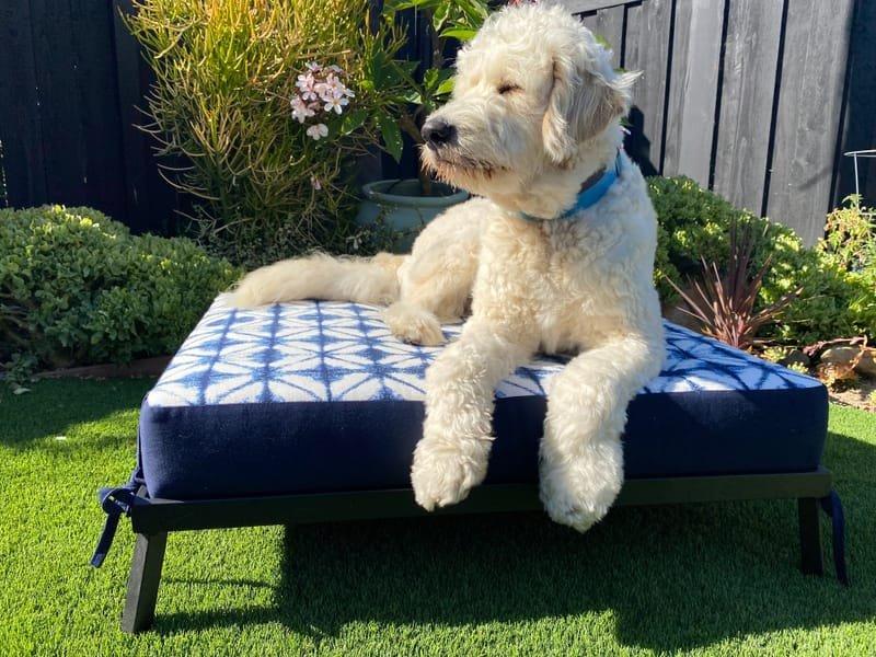 Indoor/Outdoor Sunbrella Dog Bed