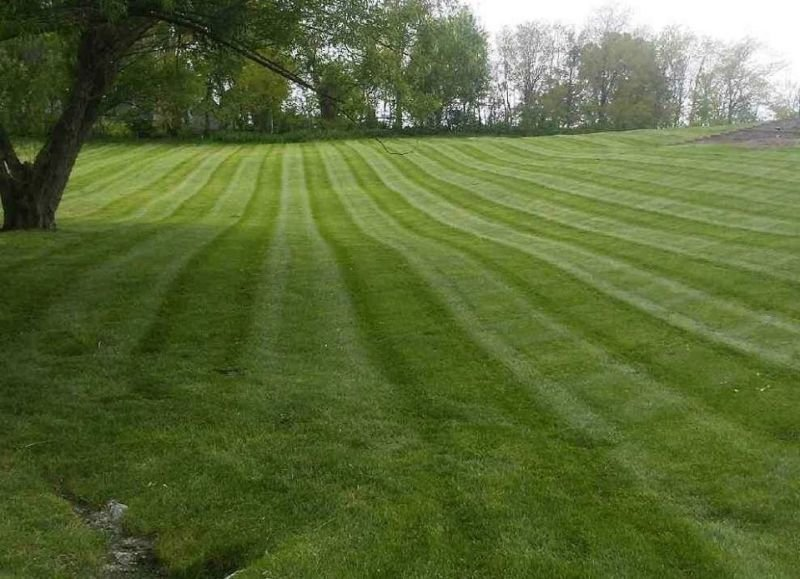 Lawn Care and Mowing