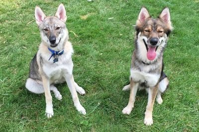 Kira and Kami