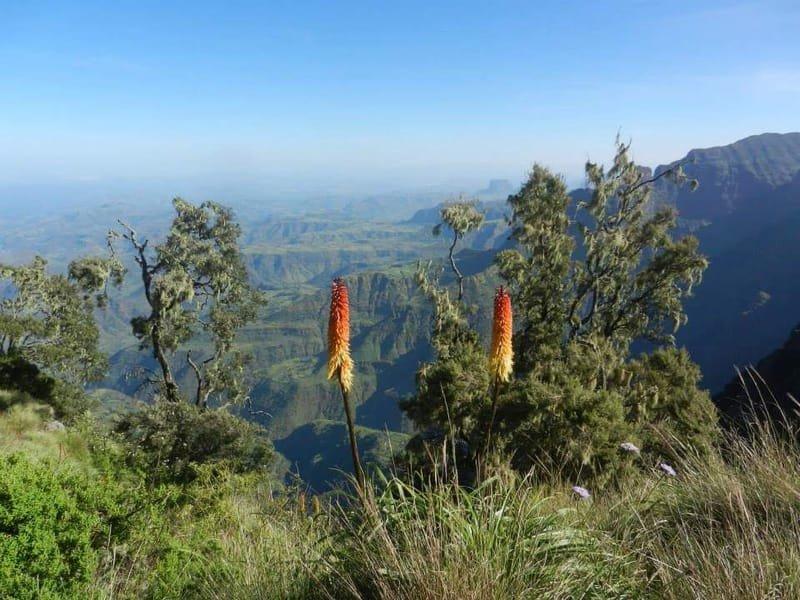 Simien Mountains trekking for 11 days