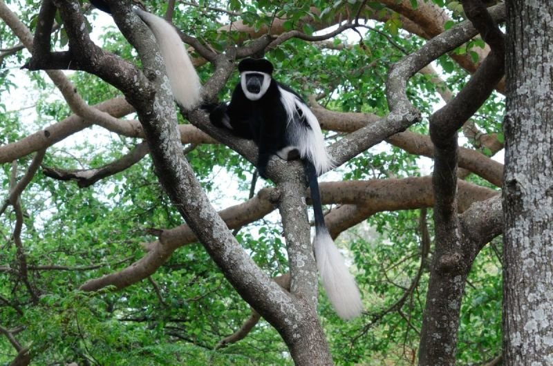 South Ethiopia for Nature Lovers- 11 days