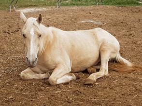טיפול בעזרת סוסים HAT