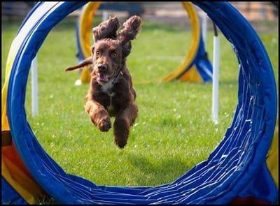 Hoopers - Canine Hoopers World Awards