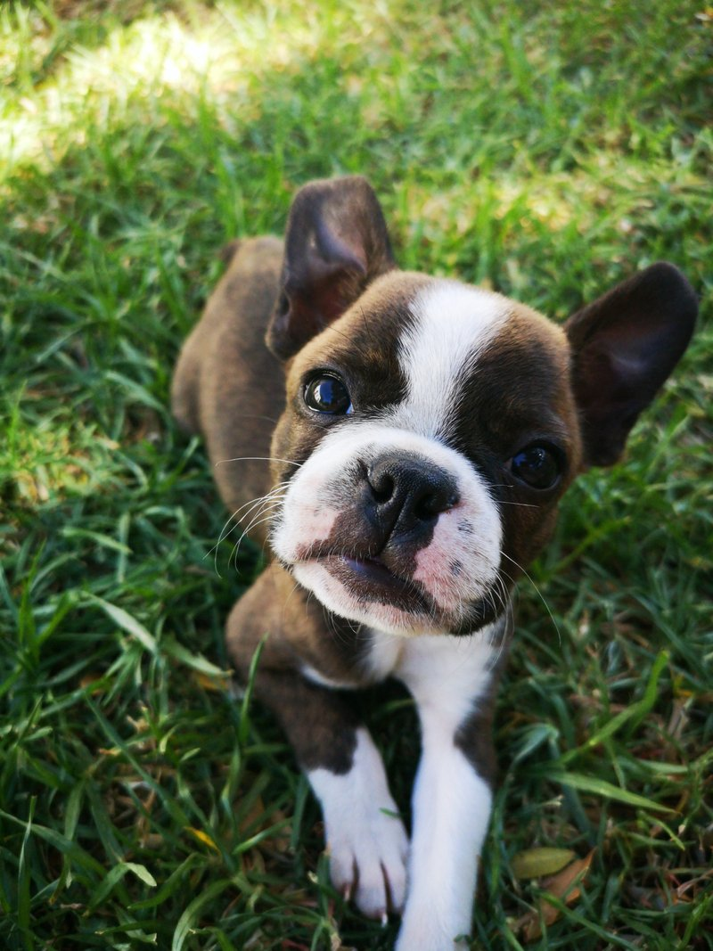 Ruby Puppy Coaching Programme