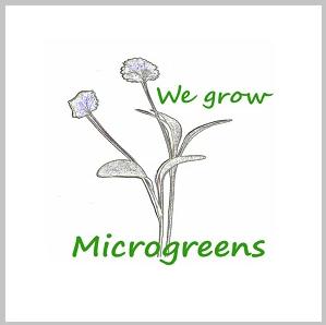 We Grow Microgreens