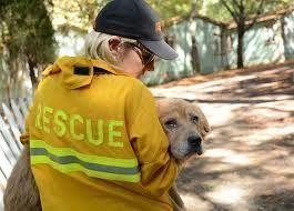 Animal Evacuation