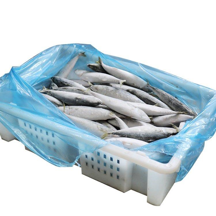 Frozen Mackerel Sea Fish