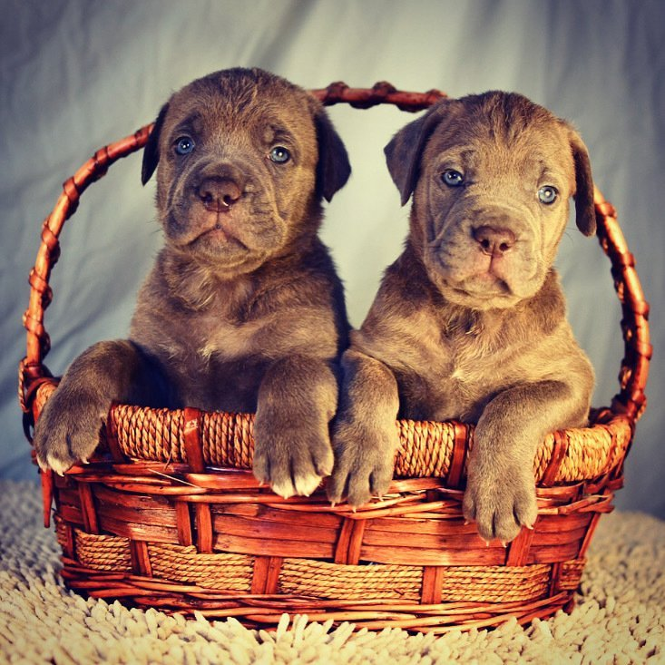 ~ OUR LITTER OF 2020 ~  NO PUPPIES AVAILABLE