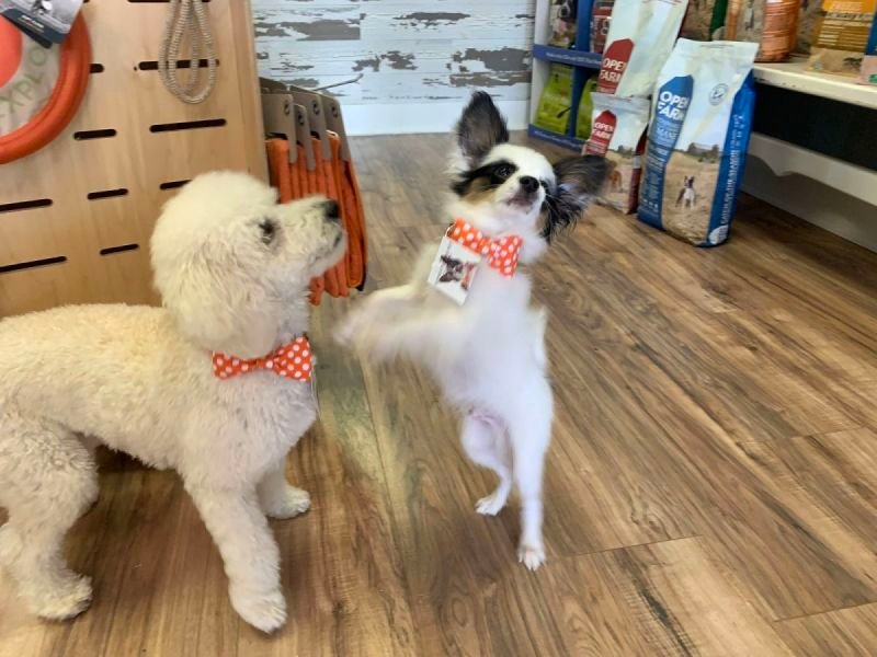 Puppy Play Group Starting Saturday Dec. 5, 12, 19