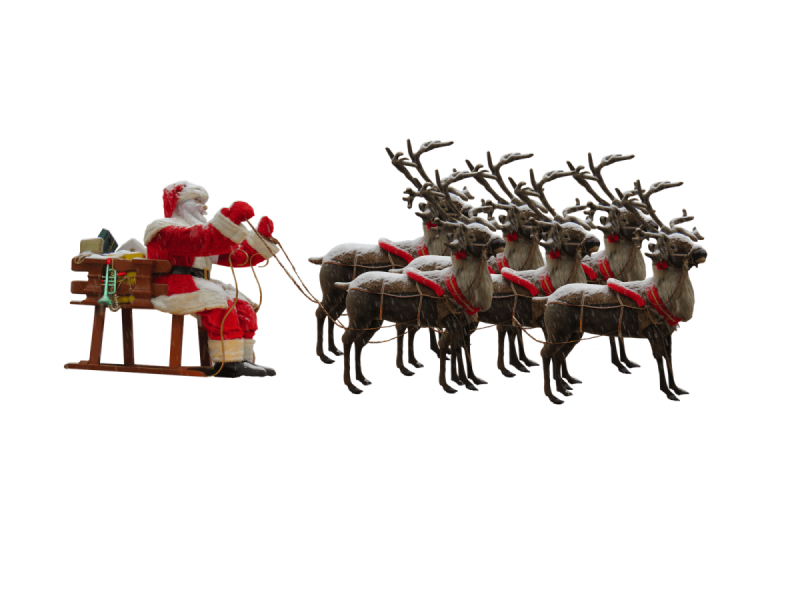 Real Live Reindeer