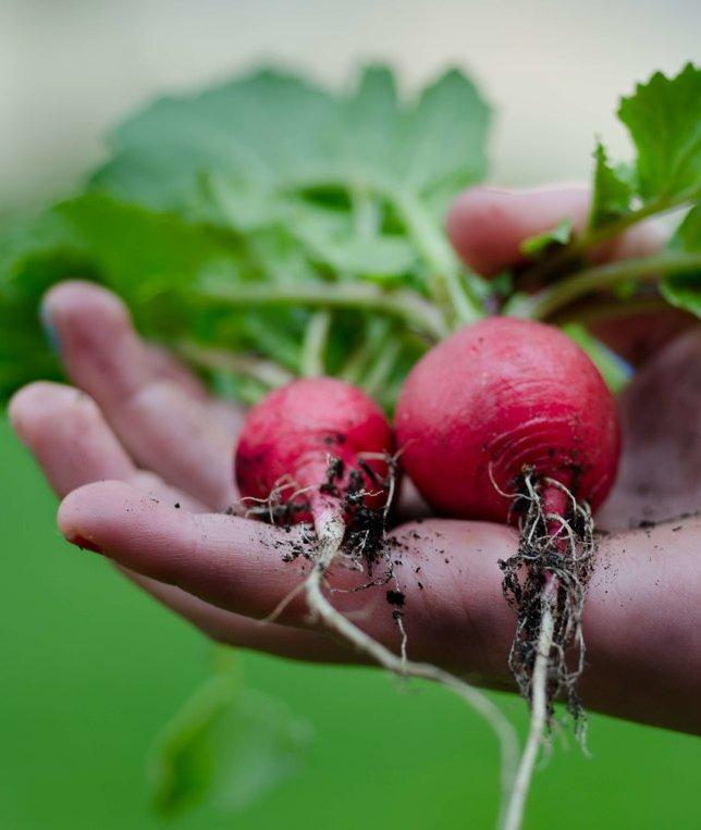 Veganics: Organics Meets Veganism