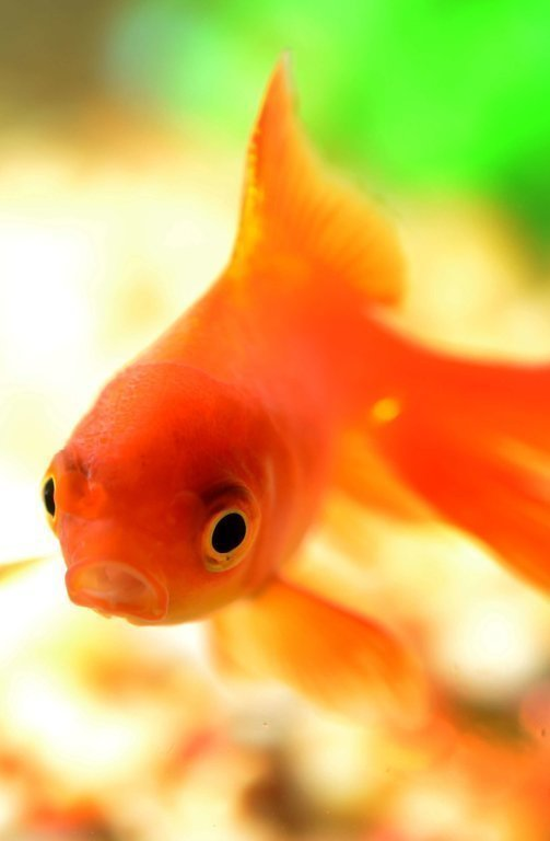 Fish In Tanks