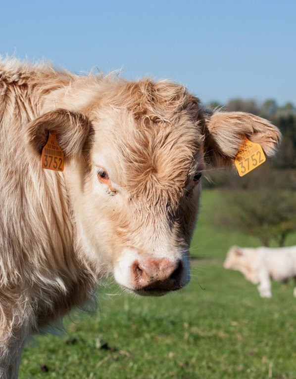 Animal Agriculture Causing Extinctions