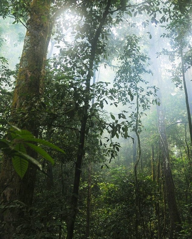 Animal Agriculture Destroying Tropical Forests