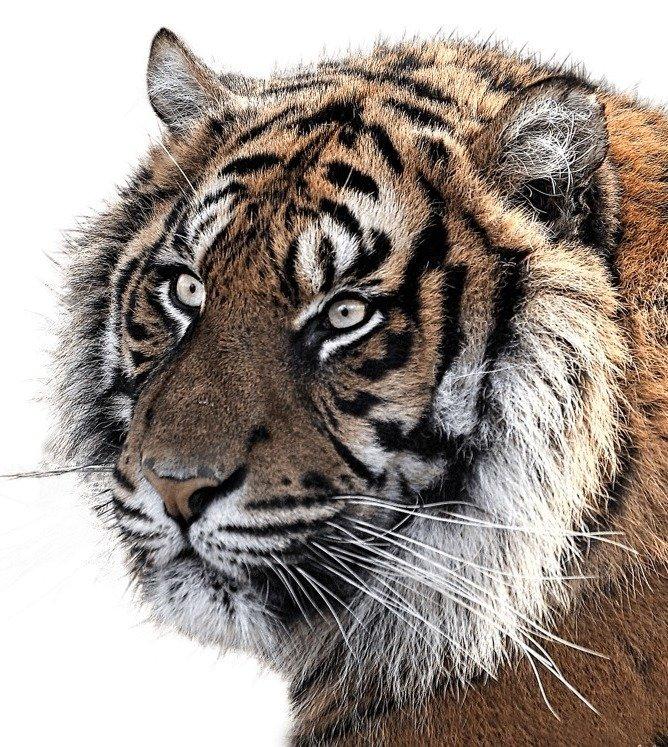 10 Ways To Help Endangered Species