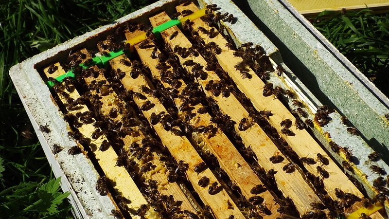 About our Bees