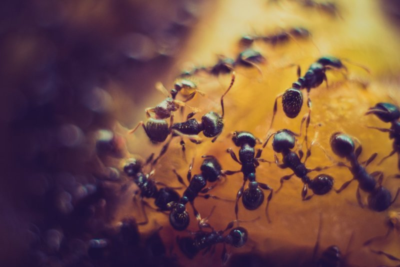Anderson Termite & Pest Solutions