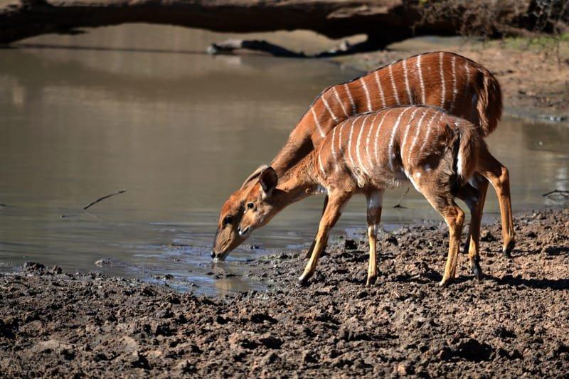 Rekopane Wildlife Managment Services