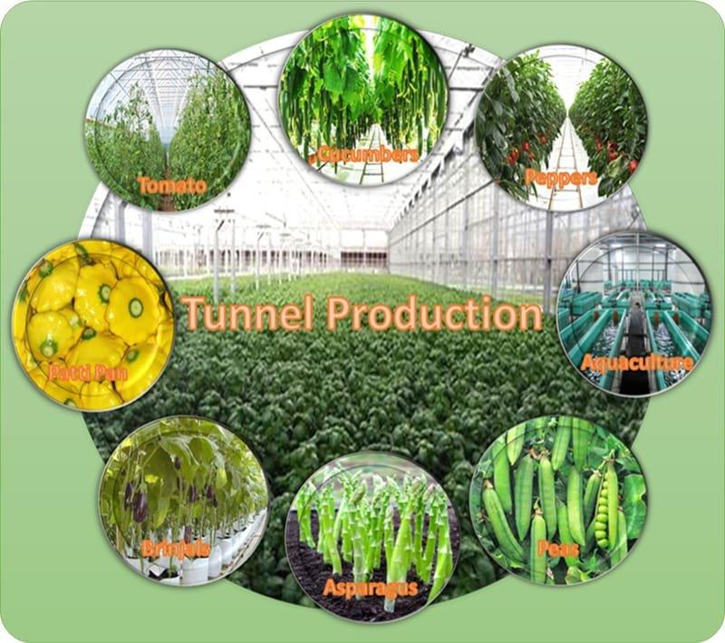 Agri Sub Hub Tunnel Production