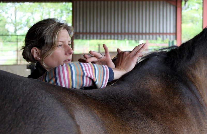 McTimoney Treatment for Horses