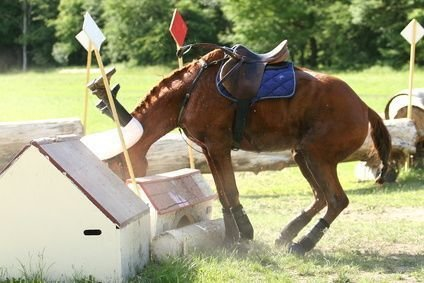 When to Seek Treatment for Your Horse