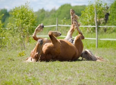 Causes & Signs of Problem Areas in Horses