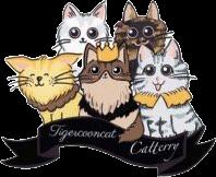 Tigercooncat
