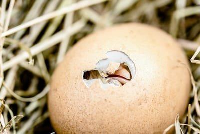 מסכת ביצה