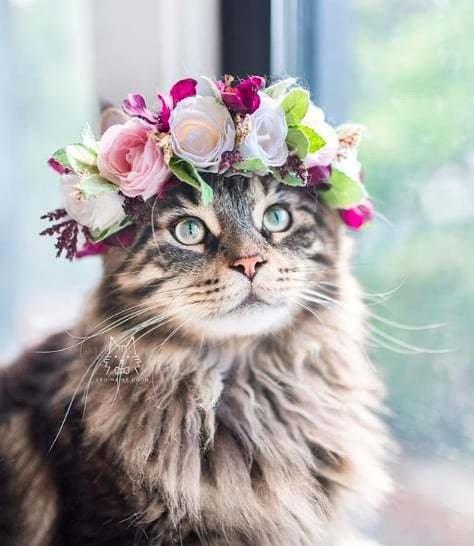 Florathérapie animale