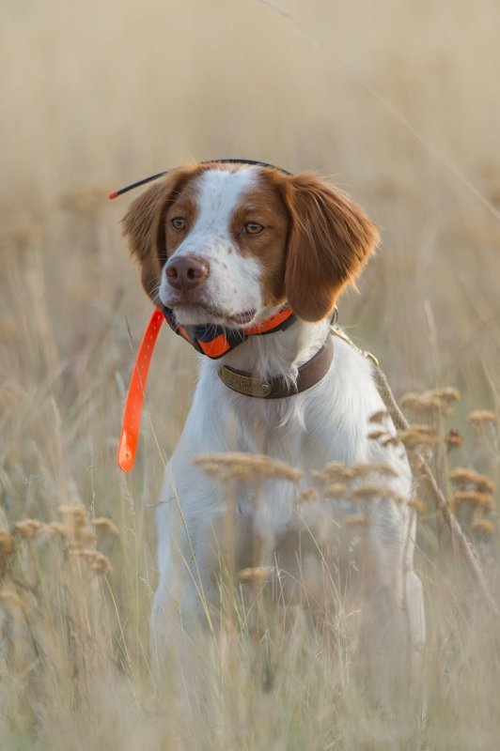 Dog Training Coach